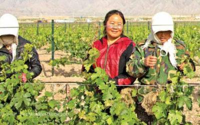 The Perfect Blend: Historic Battleground and Mystical Wine Region